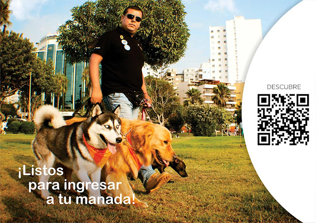 diploma de entrenador de mascotas jlpintadol
