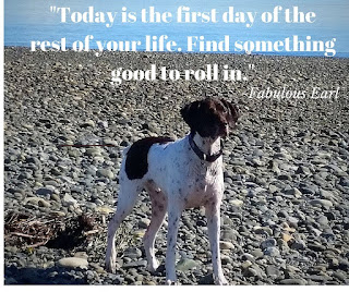 German shorthaired pointer: Today is the first day of the rest of your life.  Find Something good to roll in.