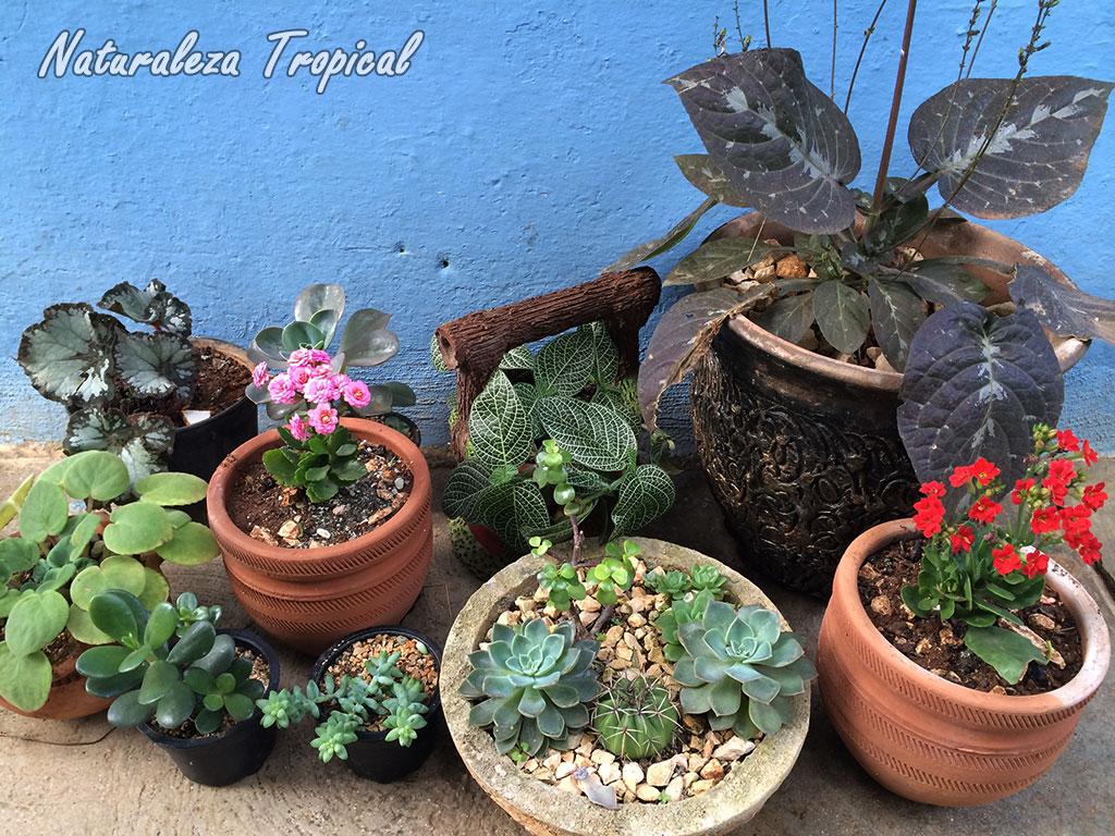 Naturaleza tropical 10 consejos para el cultivo en macetas for Fotos de plantas en macetas