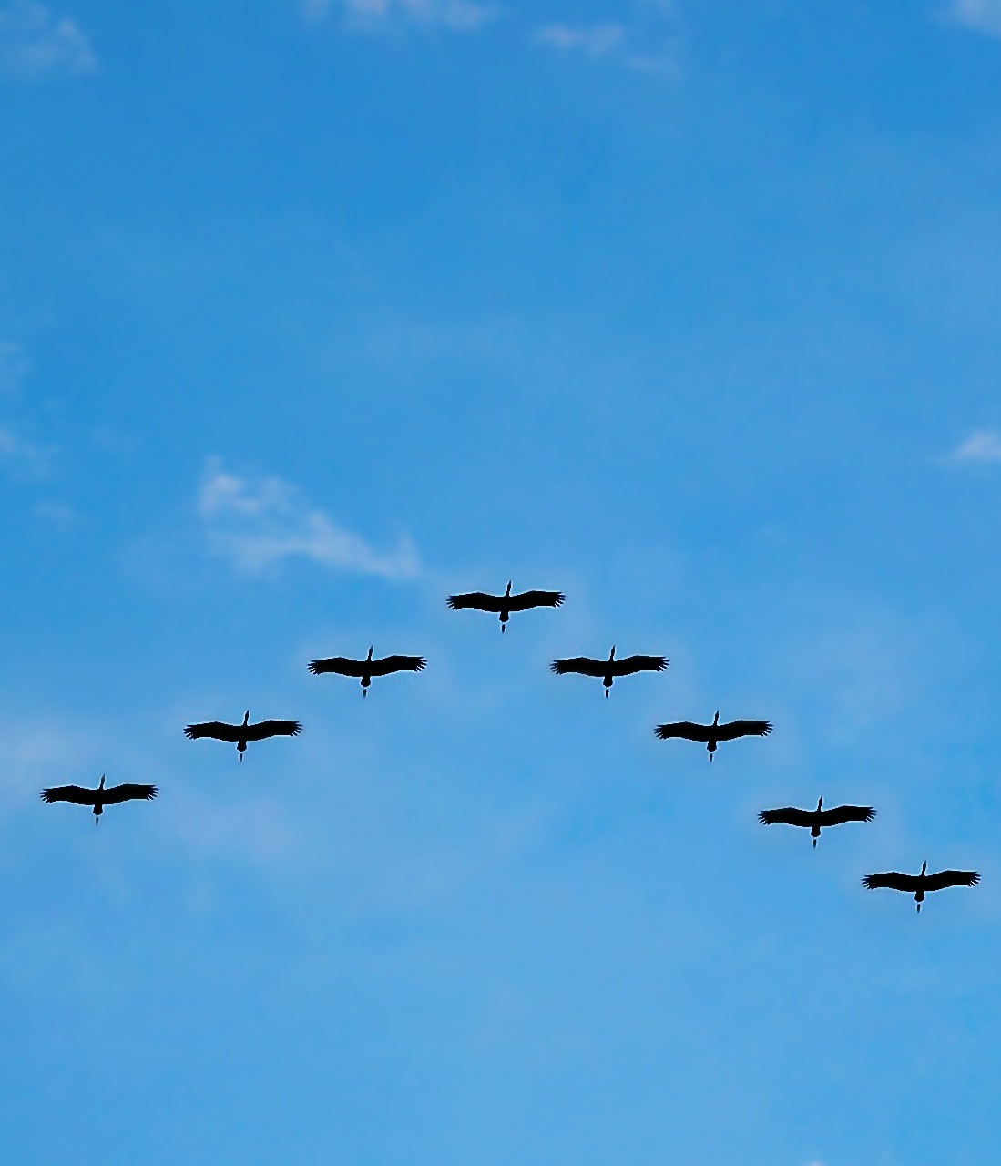 Picture of birds flying in v formation.