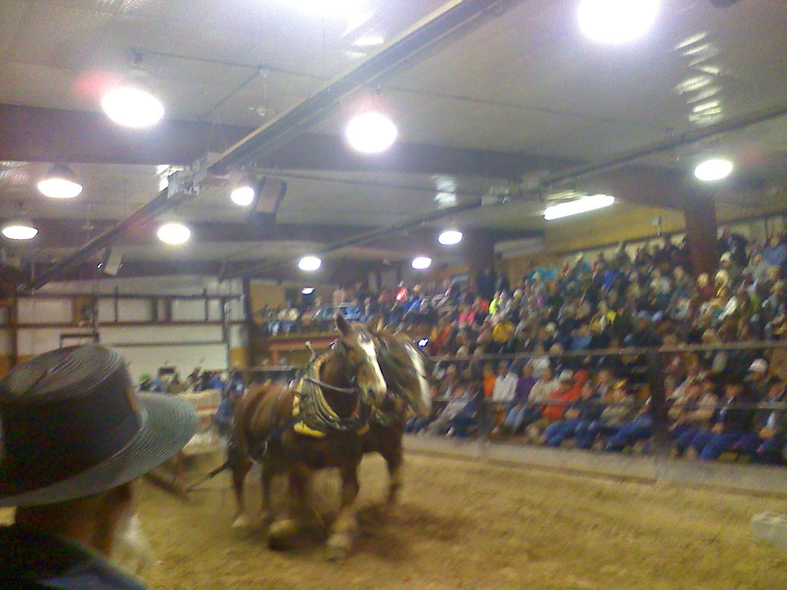 Amish Horses: Amish Horses For Sale