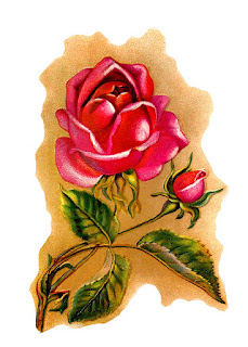 flower rose illustration vintage art