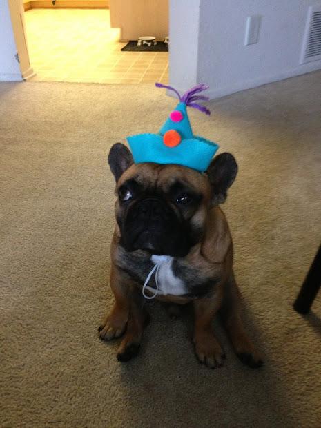 DIY Party Hat Dog