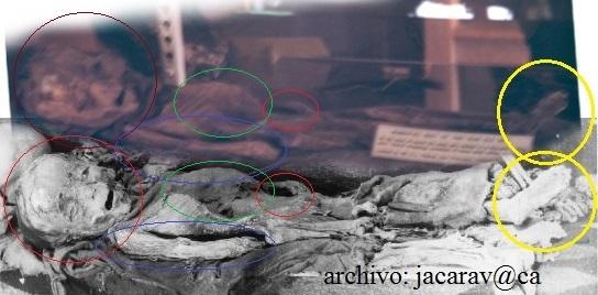 5dcc558124 Destacados los elementos en común entre ambos cuerpos (Rojo, Verde y  amarillo) y destacado el punto que Maussan considera mas diferente, el  brazo derecho ...