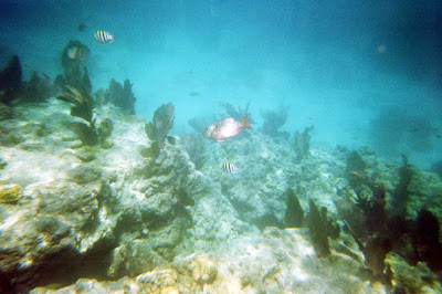 snorkling key west