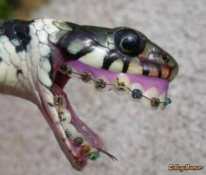 Wallpaper gambar lucu ular pake behel  Wallpaper Lucu Unik