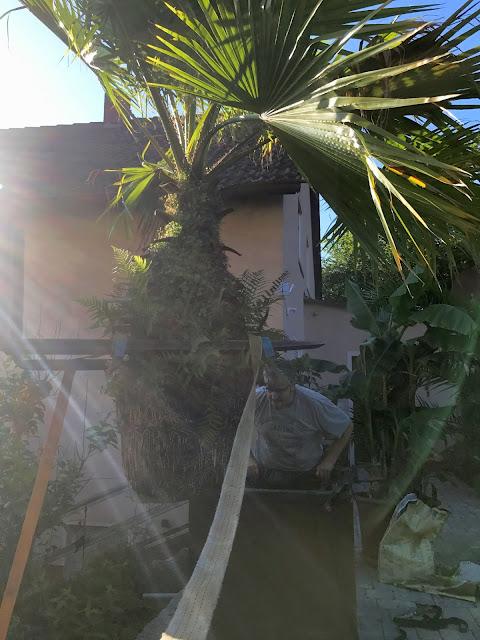 die Palme schwebt, jetzt muß der Topf drunter (c) by Jochim Wenk