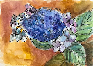 floral watercolor sketch by Marion Corbin Mayer