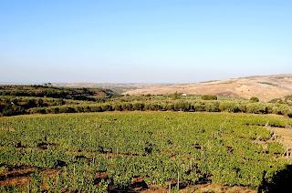 Cantina Il Passo Basilicata wine region