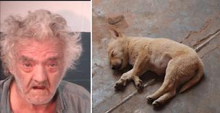 Αρρωστημένο: Τον άφησαν ελεύθερο και συνουσιάστηκε ξανά με άλλο σκύλο ο ηλικιωμένος στην Αμαλιάδα
