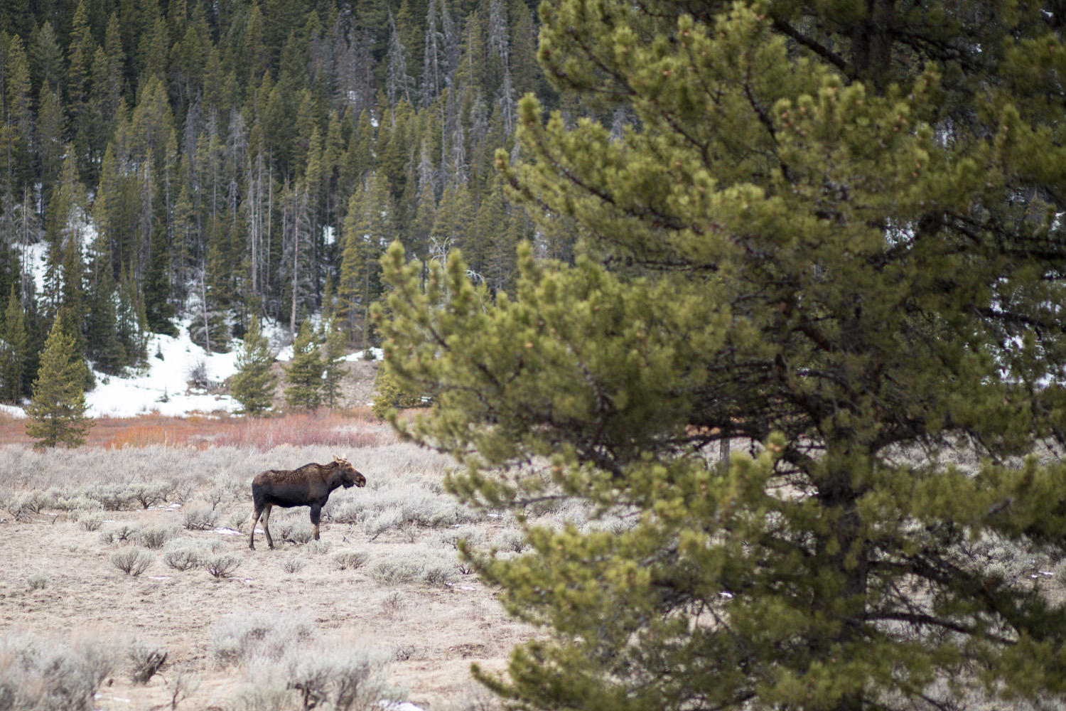 Things to do in West Yellowstone