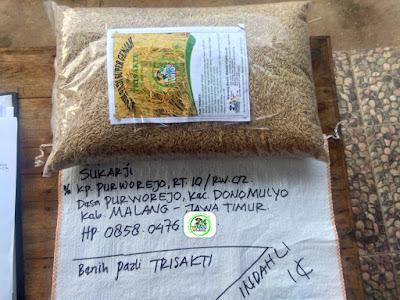Benih pesanan SUKARJI Malang, Jatim.   (Sebelum Packing)