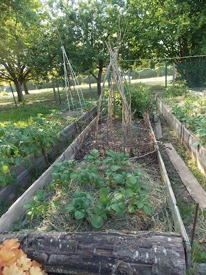 Solutions de culture pour un jardin à l'ombre