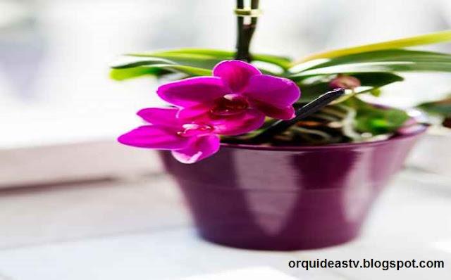 Plantio e replantio