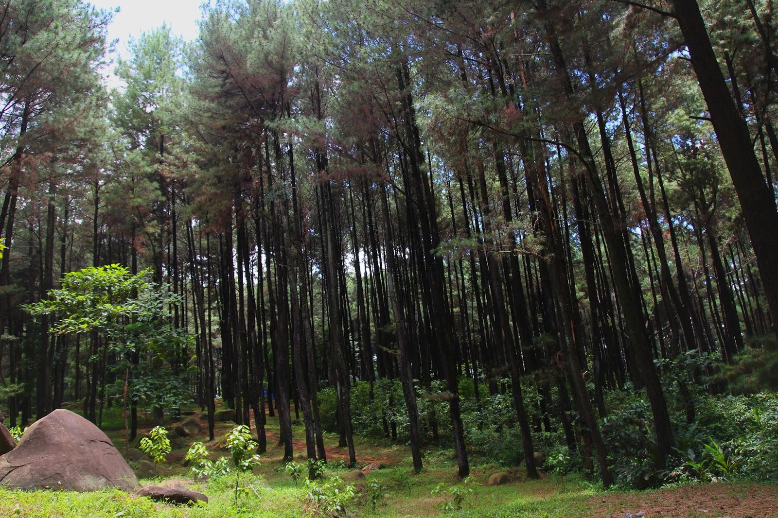 Wisata Gunung Pancar: Hutan Pinus dan Air Panas