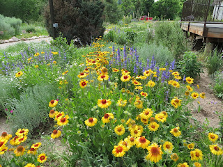 Landscaping with Colorado Native Plants Conference coming soon