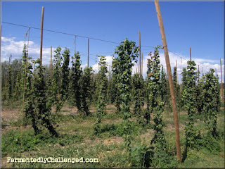 Colorado Hop Farm