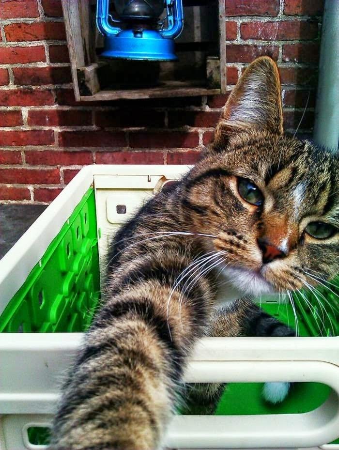 Kucing Foto Selfie