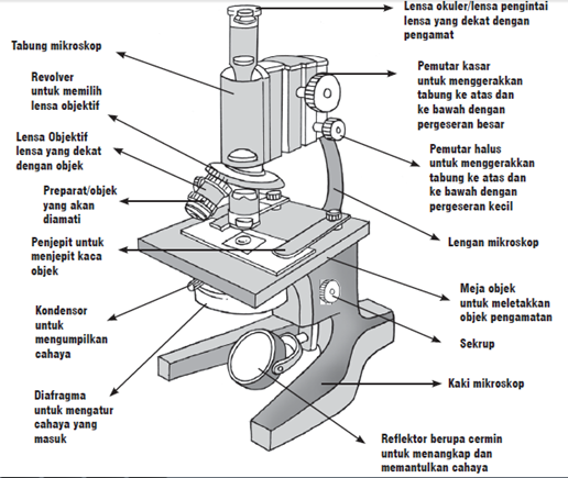 Bagian Bagian Mikroskop Binokuler Serta Fungsinya Terlengkap