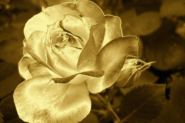 Golden Rose Rich Color 44 | Cajkine kandže i sve njihove boje