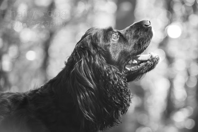 Aberdeen dog photographer, Jamie Emerson of Hairy Dog, this is bokeh