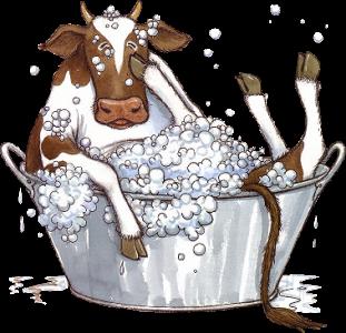 caricatura  vaca en bañera png