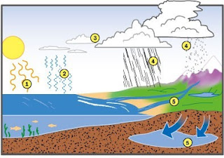 中一科學堂:水循環