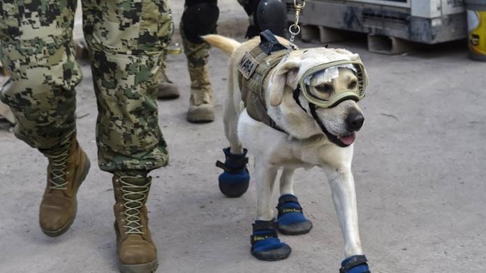 Otto cani eroici che meritano la nostra riconoscenza