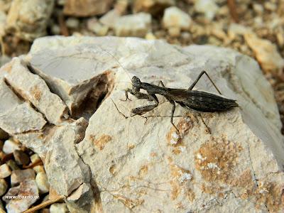 ωφέλιμα-έντομα