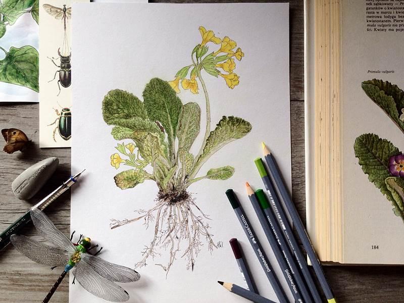 Ćwiczenia w szkicowaniu rysowaniu i malowaniu
