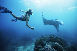Manta bay Snorkeling | Sunia Bali Tour