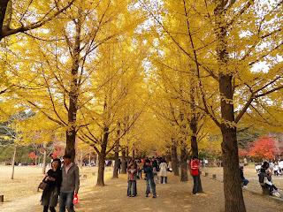 Paket Tour Halal Korea Autumn Cheria