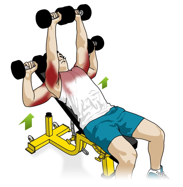 Single Arm Dumbell Bench Press: Workoutpedia: Chest
