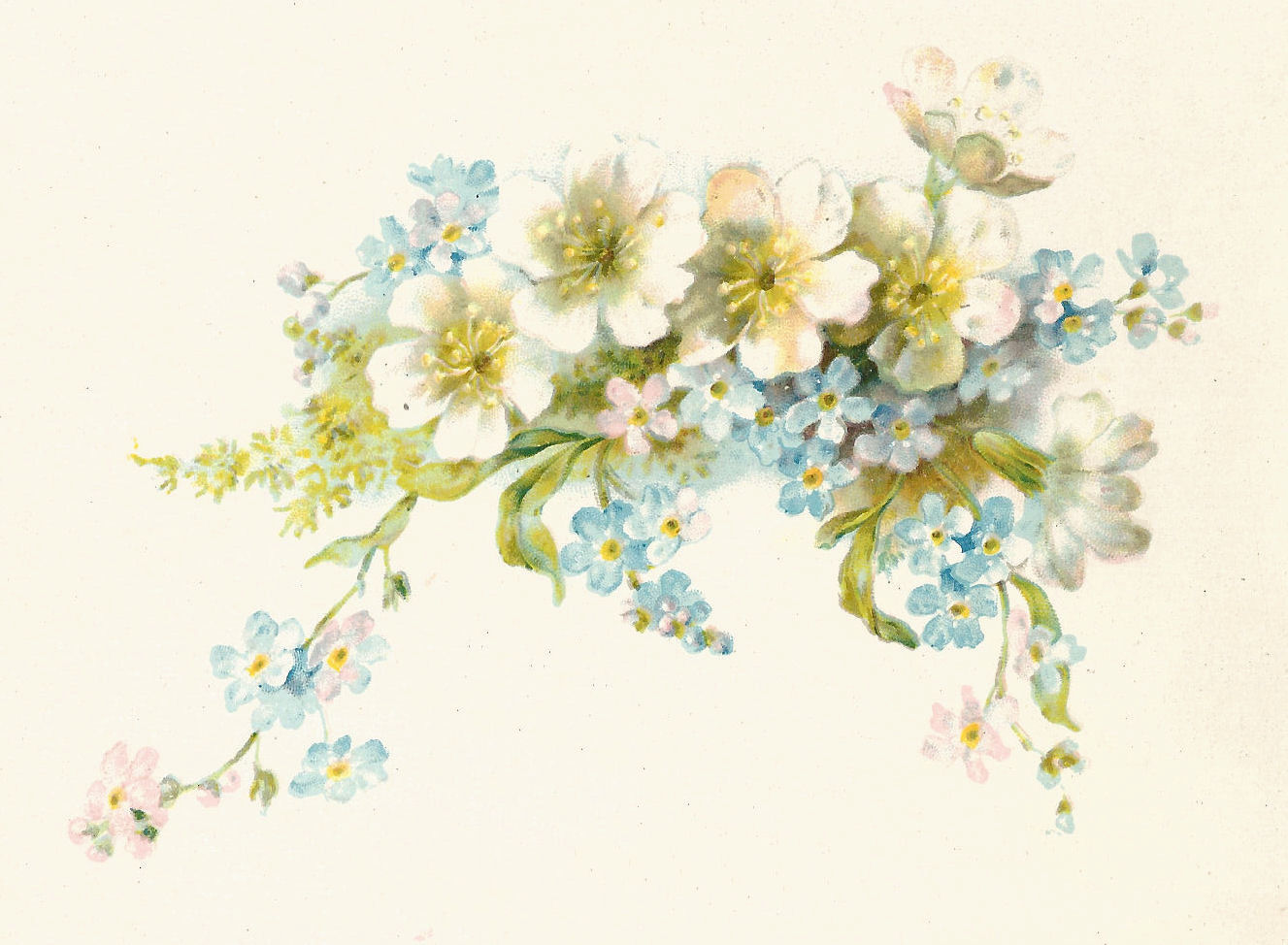 Antique Images Free Flower Graphic Vintage Illustration Of White