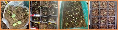 Рассадные ёмкости из подручных материалов / Блог Дача-это просто!