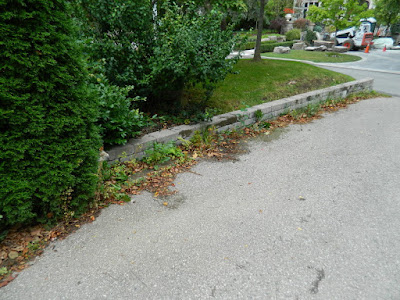 Forest Hill Toronto front garden fall clean up before by Paul Jung Gardening Services
