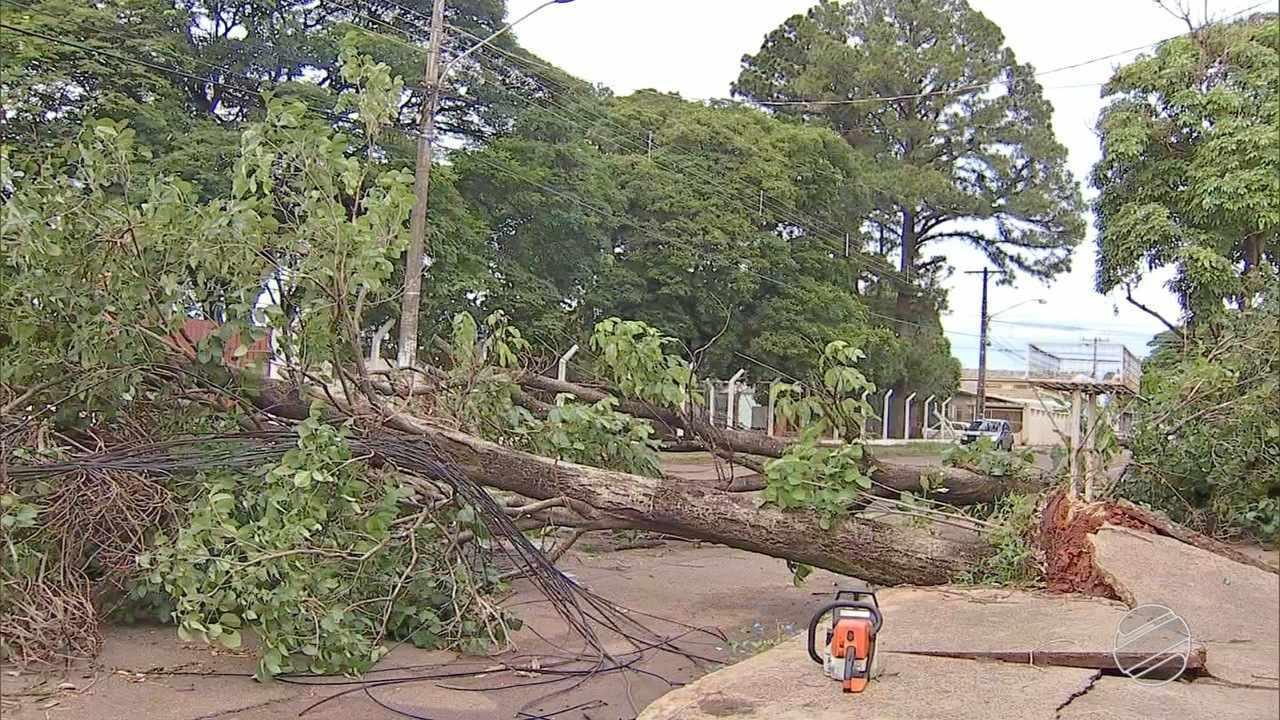 Arvores derrubadas por fortes ventos