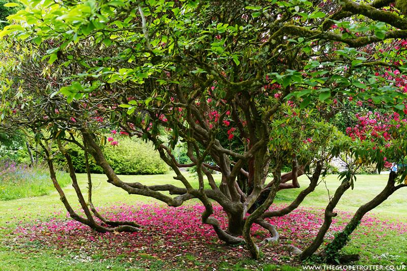 Lanhydrock - National Trust