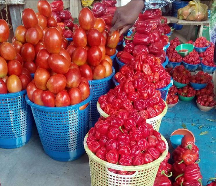 tomato scarcity in Nigeria