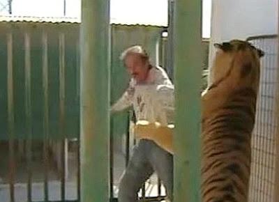 notem que, em todos os casos, os ataques ocorreram devido à ação imprudente e forçada de pessoas que ainda insistem em querer domar, brincar, exibir, se exibir e desrespeitar feras.   Com exceção das regiões em que a população reside e trabalha muito próxima ao território dos tigres, as tragédias ocorrem, com frequência, em zoológicos e nos espetáculos em que os animais são exibidos.  É loucura...afinal, por mais dócil que seja o animal, uma fera será sempre uma fera imprevisível!