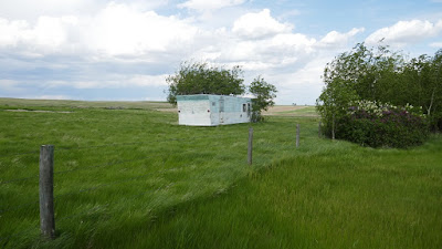 abandoned, mobile home, Alberta, Schuler, lilacs, home