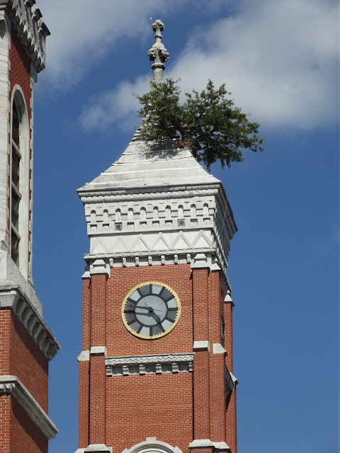 Greensburg's Courthouse Tower Tree