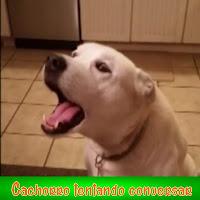 http://preguicaalheia.com/cachorro-tentando-conversar-com-a-sua-dona/