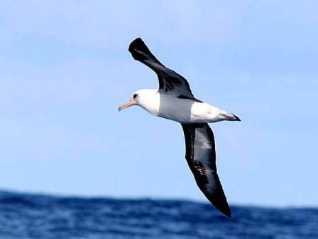 Giải mã giấc mơ thấy Hải âu & Ý nghĩa mơ thấy chim hải âu