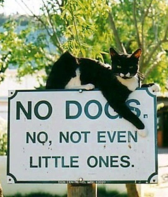 Funny No Dogs Cat Sign Picture