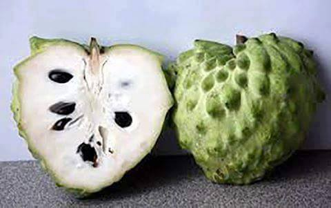 تعرف على الامراض التي تعالجها فاكهة القشطة أو الجرافيولا ؟