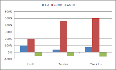 Taurine-et-marqueurs-AKT-mTOR-AMPK
