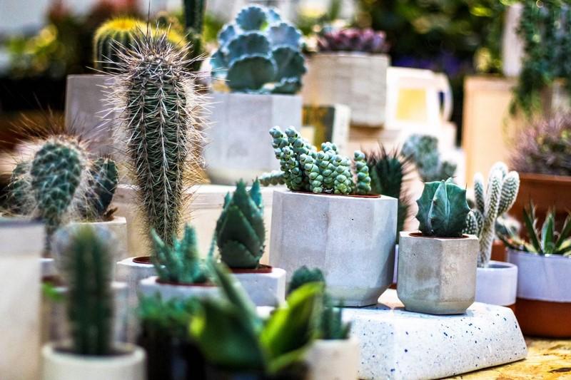 Pequeños jardines urbanos RHS London Urban Garden Show 2016