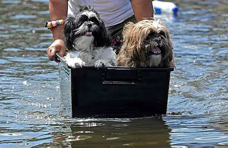 dogs in a container through floodwaters