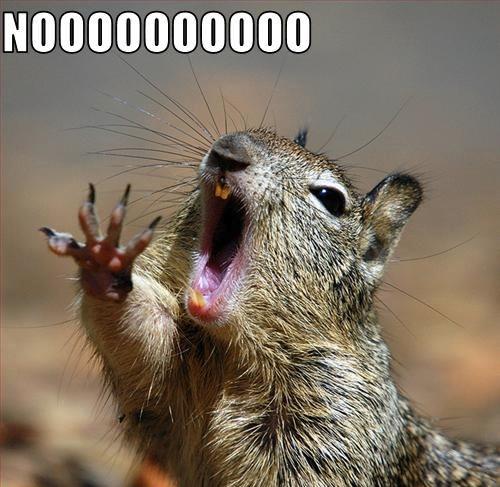 squirrel-nooooooo.jpg